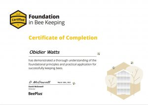 Foundation-certificate-example